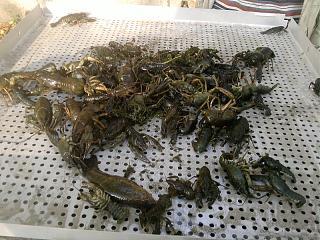 Рыбалка-p011011_16.49_-01-.jpg