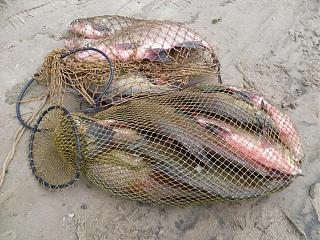 Рыбалка-p1040373.jpg