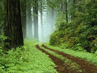 Сравниваем Caddy с конкурентами-forest.jpg