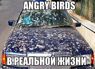 Картинки и все подобное для поднятия настроения!-angry-birds.jpg