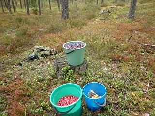 Тихая охота. Грибы, ягоды...-p1000356.jpg