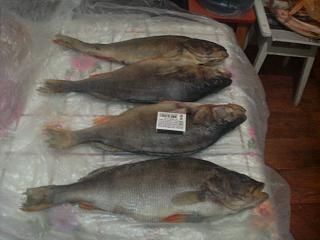Рыбалка-021120132161.jpg