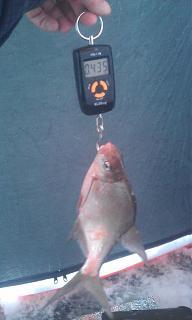 Рыбалка-imag0008.jpg