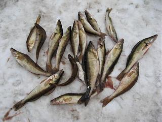 Рыбалка-img_6268.jpg