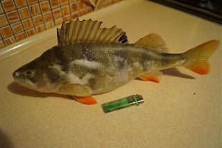 Рыбалка-dsc07700.jpg
