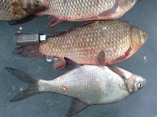 Рыбалка-foto0388.jpg