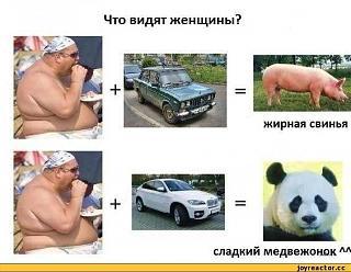 Для поднятия настроения!-zhirnaya-svinya.jpg