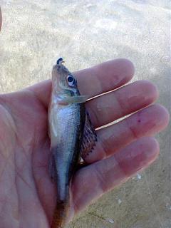 Рыбалка-foto0058.jpg