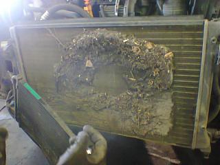 Чистка радиаторов - кто делал?!-foto0070.jpg