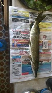 Рыбалка-wp_20140907_002.jpg