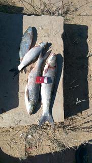 Рыбалка-img-20141004-wa0000.jpg