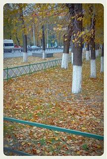 Интересные фотографии, сделанные членами клуба-kopiya-img_20141009_095755.jpg