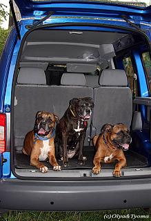VW CADDY 1.6 BSE-image.jpg