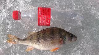 Рыбалка-dsc_0442.jpg