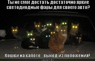 Пакости автомобилисту.-koshki-na-kapote_1344265947.jpg