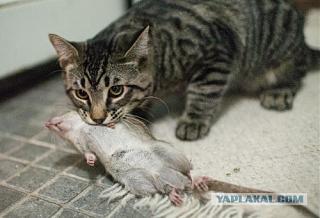 Парни.  Хелп!!! крысы.-3207305.jpg