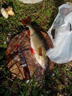 Рыбалка-img_20150621_073733.jpg