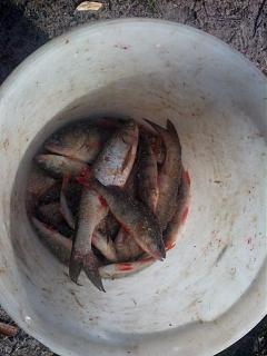 Рыбалка-img_20150715_080406.jpg