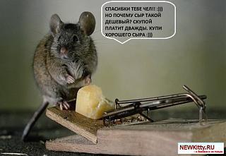 Флудилка-1434958787_wpapers_ru_syr-i-mysh.jpg