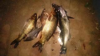 Рыбалка-dsc_0785.jpg