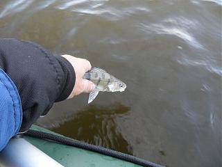 Рыбалка-sam_5626.jpg