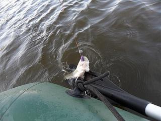 Рыбалка-sam_5629.jpg