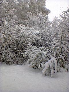 И о погоде-sneg2.jpg