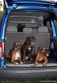 Дополнительная защита авто от угона-image.jpg