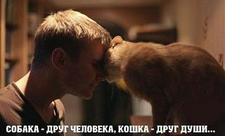 Домашние питомцы.-image.jpg