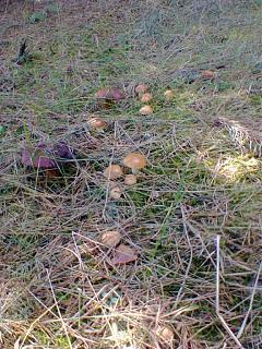 Тихая охота. Грибы, ягоды...-foto0458.jpg