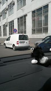Охота на Caddy.-2012-05-22-250.jpg