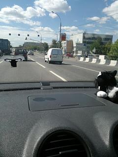 Охота на Caddy.-2012-06-19-453.jpg