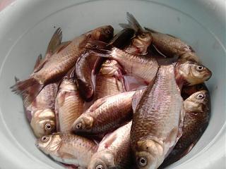Рыбалка-p300912_15.28.jpg